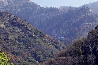 V Kalifornii objavili tlejúci sekvojovec po požiari z minulého roka.