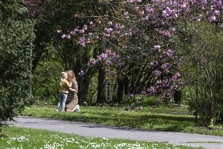 Bratislavská botanická