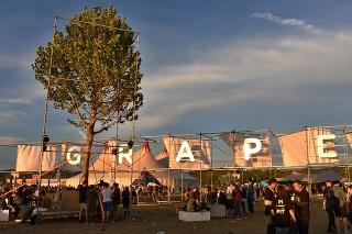 Festival Grape