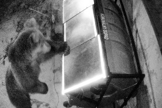 Nový systém v skúšali v košickej zoo i na  macoch v Tatrách.