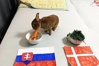 Zajko Max si pochutnáva na mrkve pri miske so slovenským znakom.