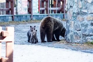 Neďaleko turistov sa pohybovala medvedica s dvomi mladými.