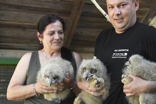 Sprava hlavný zoológ Patrik Pastorek a inšpektorka chovu Alena Čičmancová s mláďatami výra západosibírskeho.