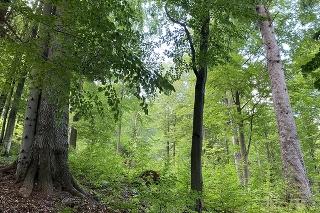 Špeciálne udržiavaný les nad obcou Livov v okrese Bardejov.