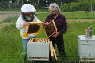 Vo firme na výrobu prevodoviek v priemyselnom parku v Kechneci v okrese Košice-okolie chovajú od minulého roku včely.