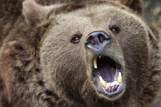 Medveď sa