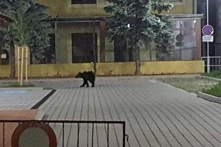 Medveď si užíval nočné mesto.