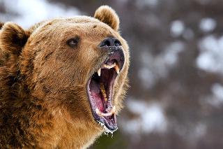 Pondelková tragédia na Liptove je prvým smrteľným stretom s medveďom v novodobej histórii Slovenska.