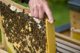 Včelie úle v prezidentskej záhrade.