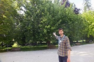 Sprievodca Jakub (30) pred magnóliou končistolistou. Strom meria 30 metrov.