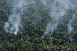 Juhoamerický prales predstavuje zelené pľúca planéty, pre Zem bytostne dôležité.