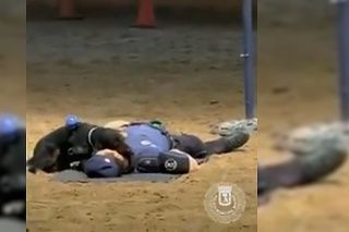 pes madridskej policie dokaze resuscitovat