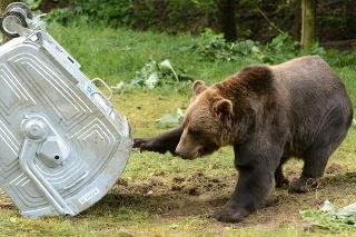Medvede obľubujú odpadky.