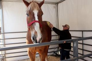 Big Jake bol najvyšší kôň sveta.
