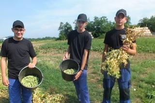 Na modelovej školskej farme v Pribeníku systémom agrohruhov pestujú hneď viacero druhov zdravej zeleniny.