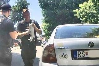 Policajti zachránili psíka.