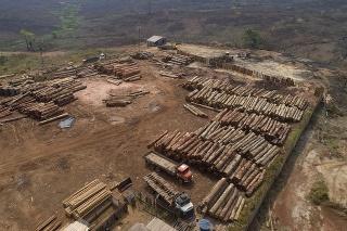 Odlesňovanie v Amazónii dosiahlo v júni nový rekord.