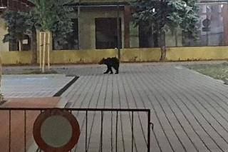 Medvede ešte