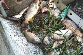 Polícia sa zaoberá situáciou na rieke Hron, kde umreli ryby.