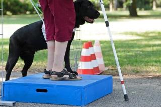 """V Nitre prebiehalo """"Sústredenie čakateľov a držiteľov vodiacich psov"""", ktoré každoročne organizuje Výcviková škola pre vodiace a asistenčné psy."""