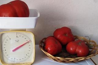 Toto leto sa tešili najmä z paradajok.