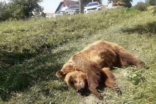 V Ivinách pri kontajneri našli uhynutú medvedicu.