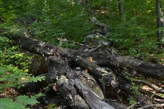 UNESCO rozšírilo územie bukových pralesov v SR na zozname svetového dedičstva.