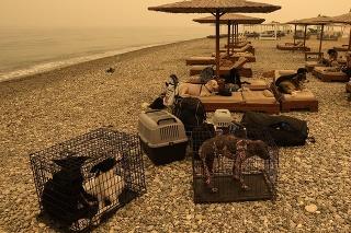 Evakuovaní ľudia a ich domáce zvieratá na pláži počas lesného požiaru v mestečku Pefki na ostrove Eubója.