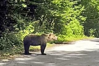 Upravená fotografie medveďa hnedého.