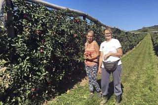 Do sadu v Čachticiach chodia oberať jabĺčka mladí aj starí.