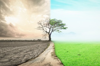 Half drought and half abundance tree standing landscape background