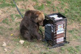 Medveď zápasí s kontajnerom.