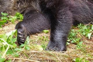 V blízkosti obydlí v osade Vyšné Hágy vo Vysokých Tatrách zastrelili medvedicu.