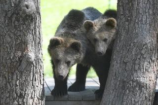 Na snímke medvede hnedé Máša a Filip v košickej zoo. Košice, 11. mája 2021.