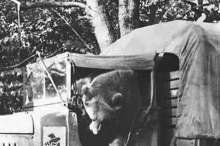 Medveď Wojtek