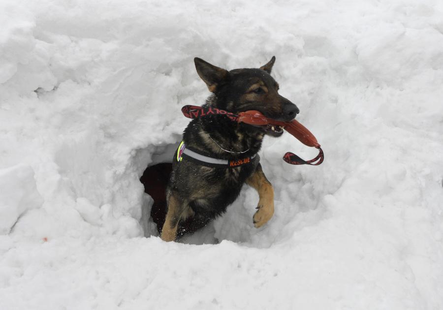 Pes počas lavínového cvičenia.
