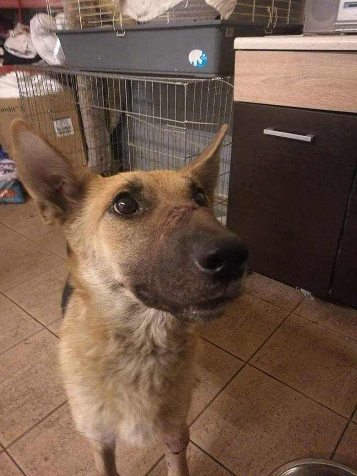 Fenke pomohol veterinár.