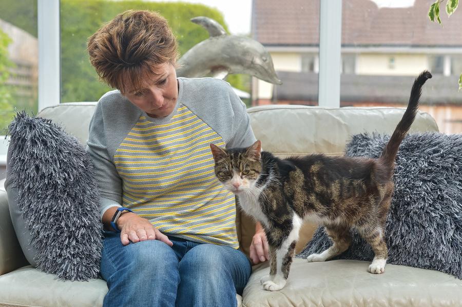 Mačka sa k majiteľke