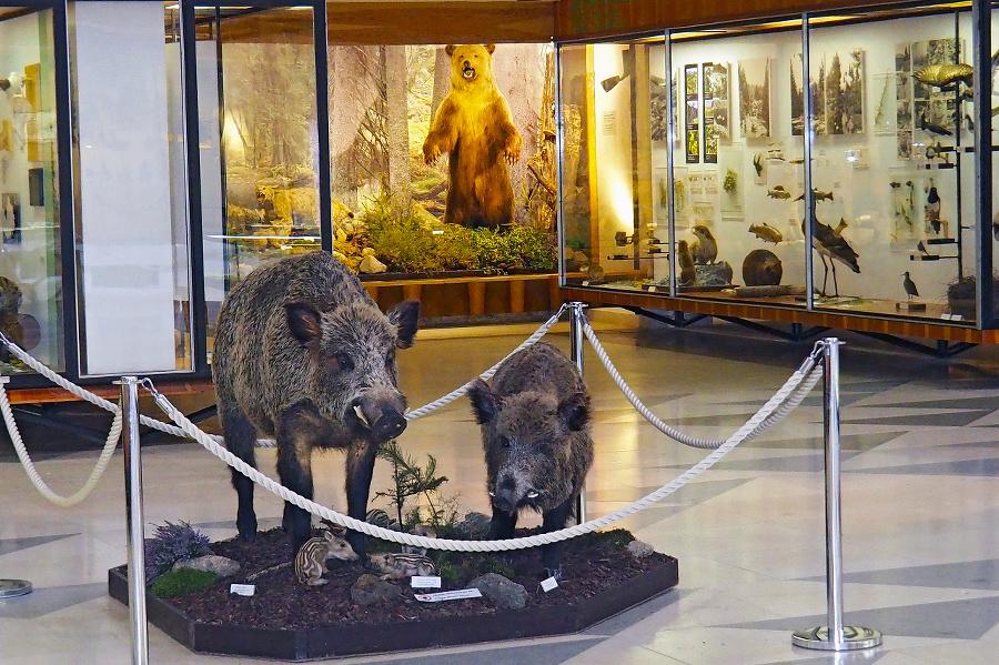 Múzeum TANAP-u