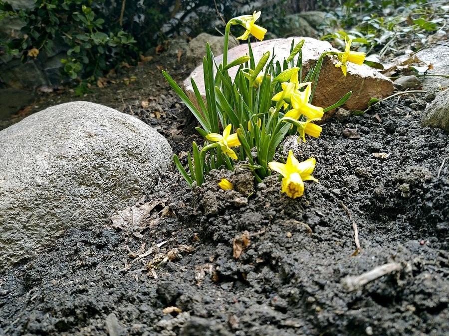 Krehké kvetiny v Tatrách