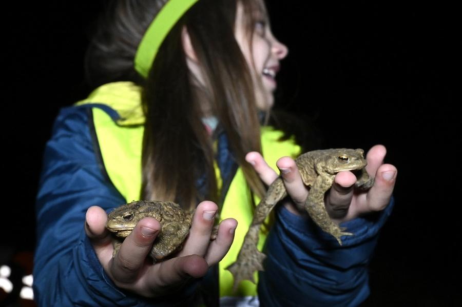 Dobrovoľníci pomáhajú žabám prežiť