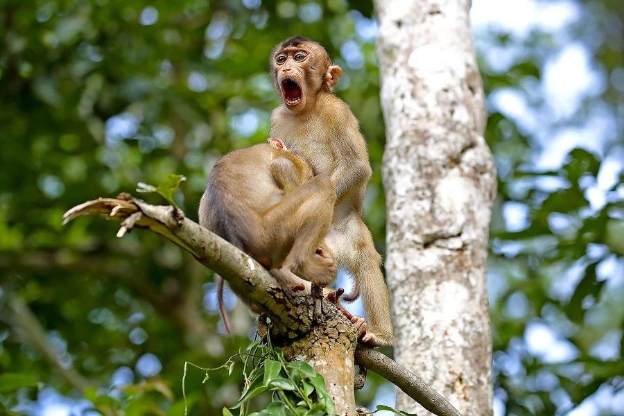 Opičí biznis