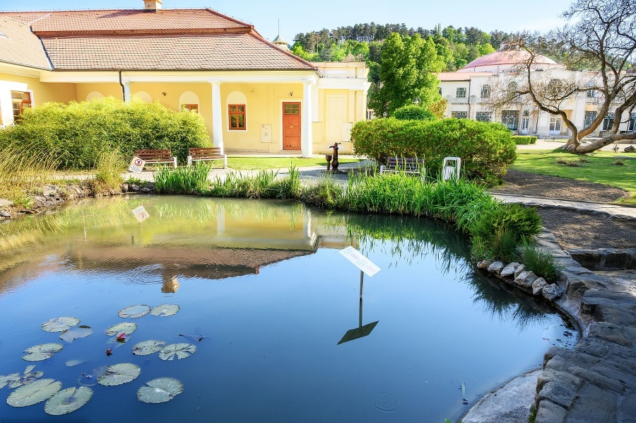 Water pond with plants