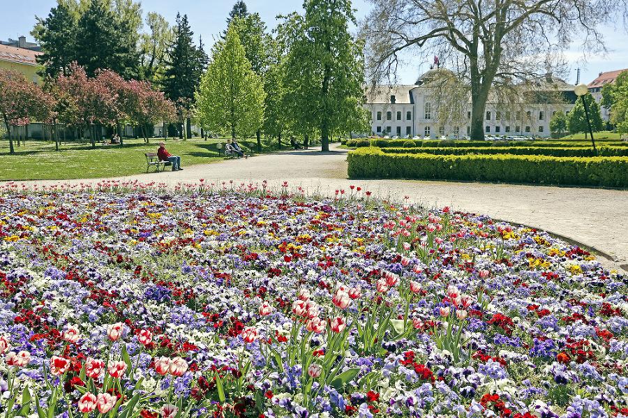 V Grasalkovičovej záhrade vysadili 5 000 sirôtok.