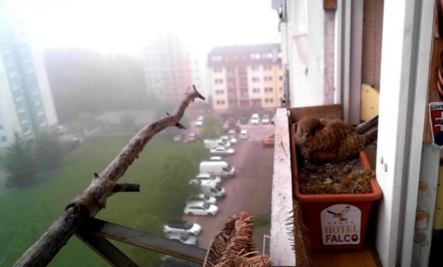 U Jaroslava na balkóne