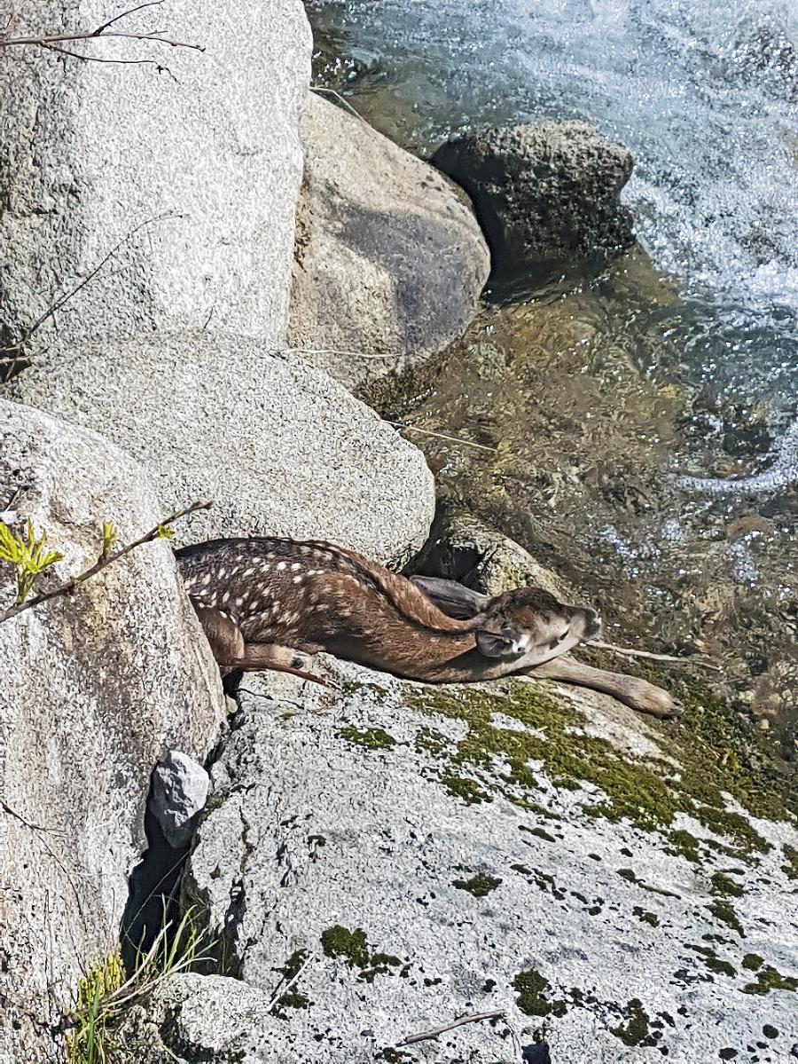 Jelenček skončil zranený a opustený.