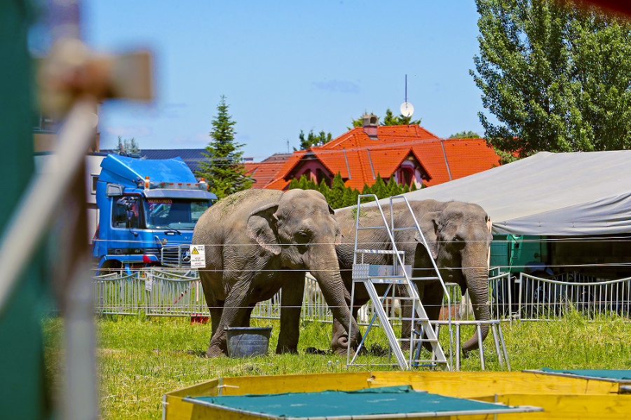 V objekte sa okrem slonov pohybujú desiatky živých exotických zvierat.