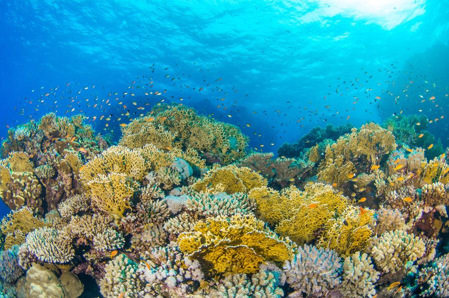 Austrália odmieta zaradenie koralovej