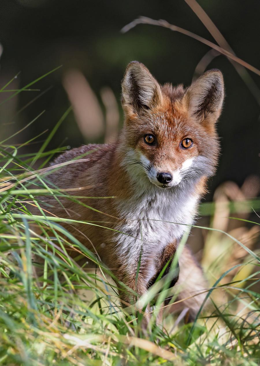 Záber líšky patrí medzi jej obľúbené.