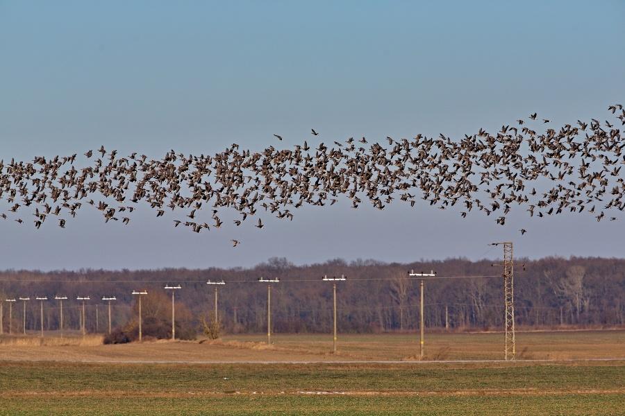 Migrácia vtáctva je nádherným